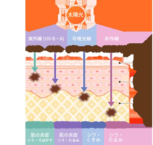 太陽光線の肌老化